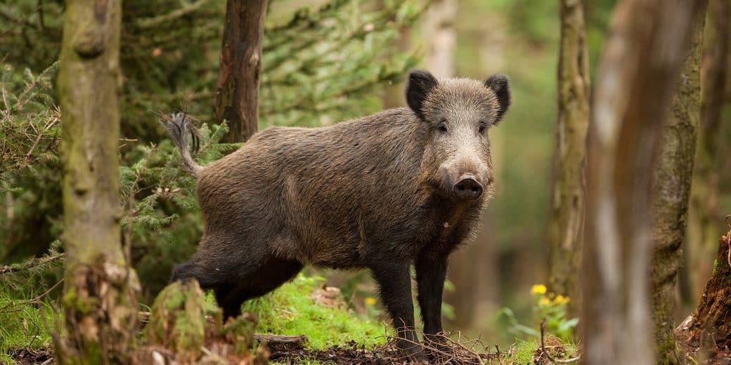 Best Hog hunting lights
